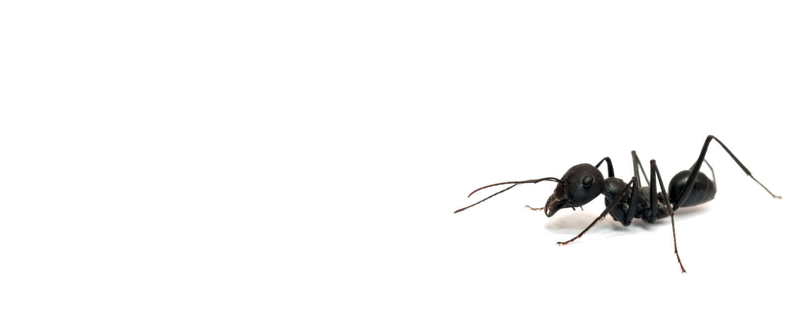 ANT PROBLEM